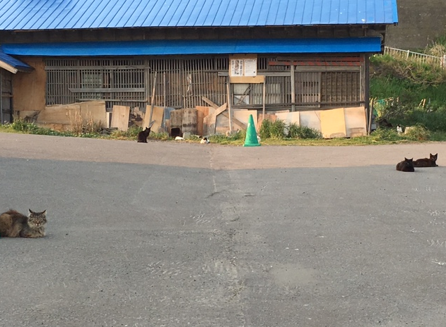 小樽 猫歩き